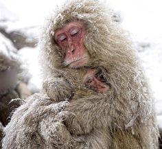 Abrázame que tengo frío!