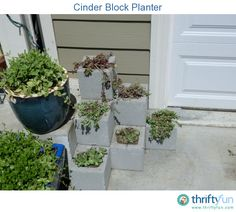 This is a guide about making cinder block planters. Cinder blocks are relatively inexpensive and can easily be stacked and arranged in numerous ways. Their holes are perfect for planting in or you can create a bigger planter by stacking them up for a raised planter.