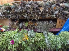 Plantas medicinales, tradición vigente