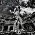 Giant Banyan Tree at Ta Prohm Temple-The modern name of a temple at Angkor, Siem Reap Province, Cambodia, built in the Bayon style largely in the late 12th and early 13th centuries and originally called Rajavihara. Located approximately one kilometre east of Angkor Thom and on the southern edge of the East Baray,