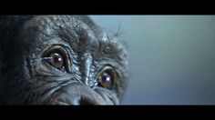 Is this really their planet? Rise of the Planet of the Apes | Cultjer