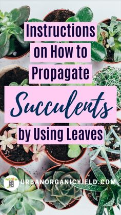 Propagate Succulents From Leaves, Growing Succulents, Succulents In Containers, Cacti And Succulents, Planting Succulents, Planting Flowers, Growing Plants, Succulent Gardening, Succulent Care
