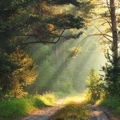 Sun streams on the forest road (Belarus) by Alex Ugalnikov (@ alex_ugalek) on Instagram cr.c.