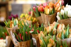 Brown paper Spring tulips