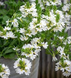 Home Flowers, Green Flowers, Spring Flowers, Plant Delivery, Ground Cover Plants, Types Of Soil, Flower Of Life, Season Colors, Hanging Baskets
