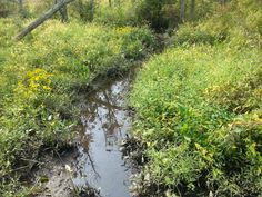 Inland Water Way more Yellow Flowers and Small Frog In the Water In River Bank                                If you want to see More Click Below.    Also Find us on:  http://hometownvintage.com http://autopartspuller.com http://preppersencyclopedia.com @HomeTownVintage @autopartspuller @preppershowto http://facebook.com/hometownvtg http://facebook.com/AutoPartsPuller