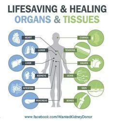 Lifesaving & Healing Organs & Tissues