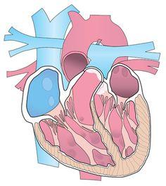 Avec plus de 50000 morts par an, les troubles du rythme cardiaque et les pathologies qui y sont liées sont de plus en plus fréquents en raison de la population vieillissante. Ils se traduisent par un cœur qui bat trop lentement, trop vite ou de...