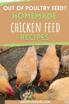 Out of poultry feed? These homemade chicken feed recipes and ideas will help! Food For Chickens, Meat Chickens, Chickens Backyard, Chicken Eating, Chicken Feed, Diy Chicken Coop, Broccoli Stems, Raw Potato, Peeling Potatoes