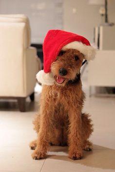 Christmas pup! #newvitality