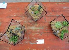 plant cubes