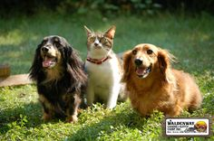 What You Should Know About Boarding Your Pets #pets #dogs #cats #dogboarding #winnipeg #canada