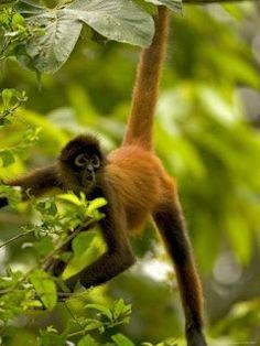 Mono colorado - inogo.info