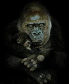 Mother and baby gorilla. :)