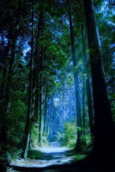 ✿ Fairy Blossoms ✿ : Photo  Blue Forest, Vancouver, Canada