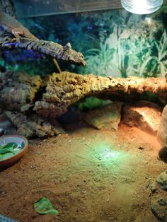 What A Natural Habitat Will Do To Your Bearded Dragon Bearded Dragon Tank Setup, Bearded Dragon Lighting, Bearded Dragon Enclosure, Bearded Dragon Terrarium, Bearded Dragon Funny, Bearded Dragon Habitat, Bearded Dragon Diet, Bearded Dragon Substrate, Chinese Water Dragon