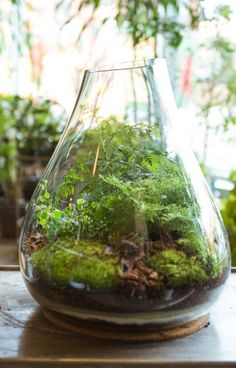Lava rock, charcoal, decorative sands then potting soil. Very pretty pictures at the website and more details. How to create your very own terrarium
