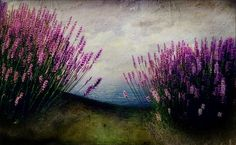 Tuscan Summer II I am beginning to love teal and plum together Under The Tuscan Sun, Mixed Media Artwork, Life Pictures, Second Life, Photo Manipulation, Traditional Art, Color Inspiration, Plum, Digital Art