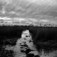Minsmere reed beds (Chris Penny) Tags: minsmere reedbeds