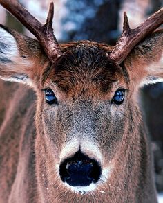 The face of a whitetail. #Deer #Buck