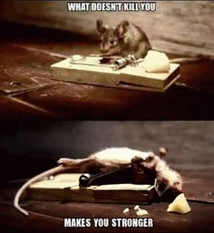 Top 20 Funniest GIF Photos #Funny Humor