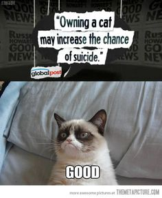 Owning a cat may increase the chance of suicide ... GOOD  (I really think that Grumpy Cat could be the only cat I'd adopt.)