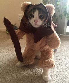 This Dude's Girlfriend Made Their Cat An Ewok Costume, and He's Not Amused