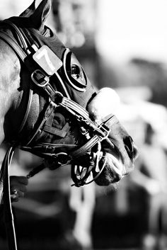 The Racehorse. Seven B@W by running horse pictures, via Flickr