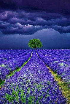 Lavender Field Storms - Stormy sky above the Lavender Fields Please also check… Beautiful World, Beautiful Places, Landscape Photography, Nature Photography, Scenic Photography, Photography Tips, Wedding Photography, Image Nature, Nature Nature
