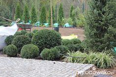 Ogród z lustrem - strona 65 - Forum ogrodnicze - Ogrodowisko