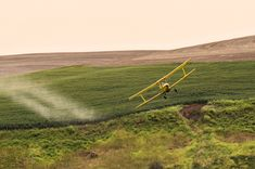 "Tell the USDA to Stop Dow Chemical's ""Agent Orange"" Crops"