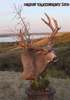 20 creative mule deer mounts | goHUNT
