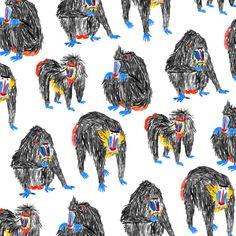 Baboons by Mouni Feddag