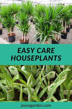This list of easy-care houseplants is great for people who love to travel. These indoor plants need little water & all are easy-care houseplants. This list of low-maintenance houseplants that need little water & are low care indoor plants will help you and your houseplants stay happy and healthy. #easycareindoorplants #houseplantsforbeginners