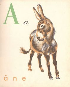 .A is for Ane