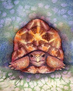 Original 5x7 Indian Star Tortoise painting by MossyTortoise, $35.00