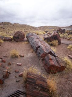 Petrified Forrest National Park. One of our many road trips with Pam and Larry