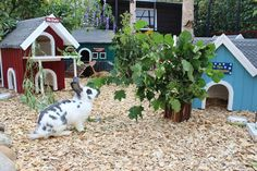 Inside those outdoor homes these rabbits have every need catered for, plenty of space, protection from predators, appropriate diet, companionship, places to hide and shelter and environmental enrichment #ahutchisnotenough Photo courtesy of Langohrwelt
