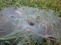 Web on my morning walk