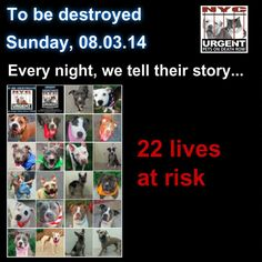 TO BE DESTROYED - 08/03/14 PITTIES ARE IN DANGER AGAIN. THERE ARE FAR TOO MANY TODAY!!! ALL THESE DOGS COUNT ON US!!! LET'S NOT LET THEM DOWN!!! PLEASE OPEN YOUR HEARTS AND PLEDGE, TAKE THEM HOME, BUT BE QUICK AS TIME IS TICKING AWAY. PLEASE BE QUICK WHEN MAKING UP YOUR MIND!!  https://www.facebook.com/media/set/?set=a.611290788883804.1073741851.152876678058553&type=3