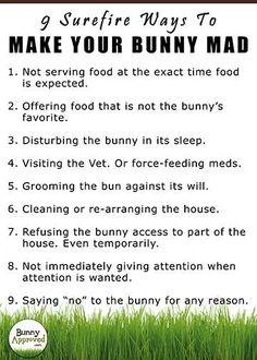 Bunnies rules