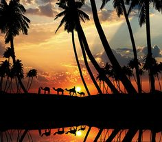 Camels Traveling Home