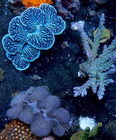 Reef Aquarium, Corals, Clam, Over The Years, Badge, Type, Badges, Sons