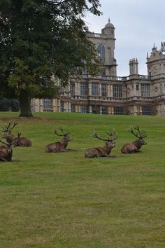 Deer at Wollaton Park, Nottingham, Nottinghamshire, England England And Scotland, England Uk, English Countryside, English Manor, English Style, Parcs, Great Britain, Places To See, Tourism