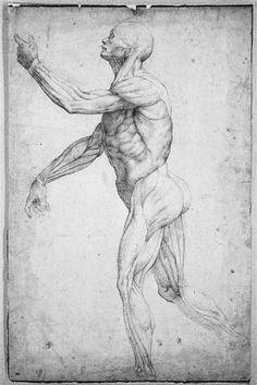 Etude d'un écorché debout, de profil, tourné vers la gauche Allori Alessandro (1535-1607)
