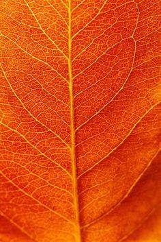 orange leaf with veins