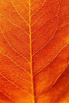 orange leaf details