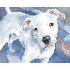 Pit bull watercolor