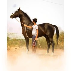 Carousel horse body clip! Looks especially cool when the horse romps around  like that! (With images) | Horses, Horse clipping, Pretty horses
