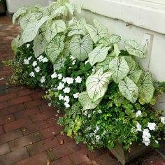 Elegant white: White coleus, white impatiens, white allyssum, variegated ivy and others.